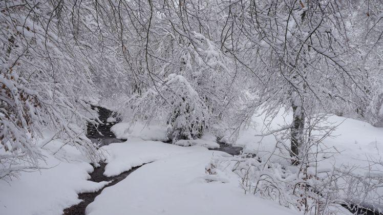 Sous la neige11