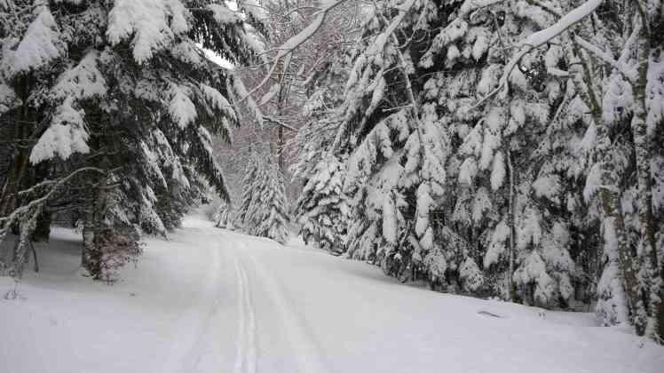 Sous la neige4
