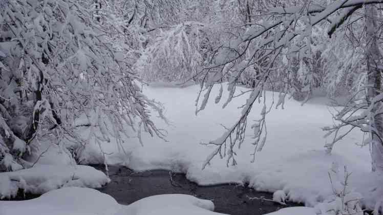 Sous la neige6