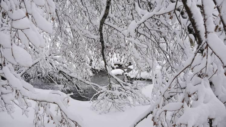 Sous la neige8