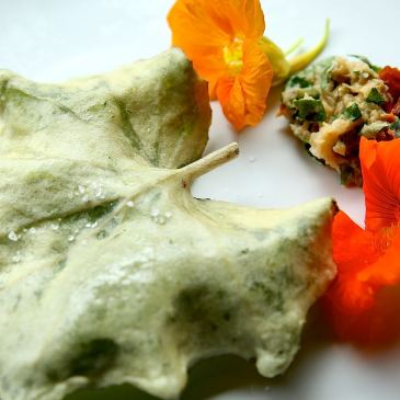 tempura-tussilage